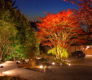 landscape-accent-lighting-on-tree
