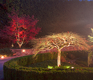 tree-accent-lighting