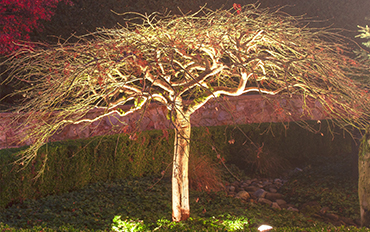 accent-lighting-on-japanese-maple