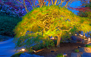 accent-lighting-on-a-japanese-maple